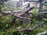 """نداء إنساني عربي لمواجهة تدميرات إعصار """" كينيث """" في جزر القمر"""